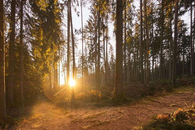 Za zdjęciu wschód słońca w lesie