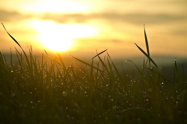 Na zdjęciu wschód słońca na łące. Krople rosy błyszczą w trawie.